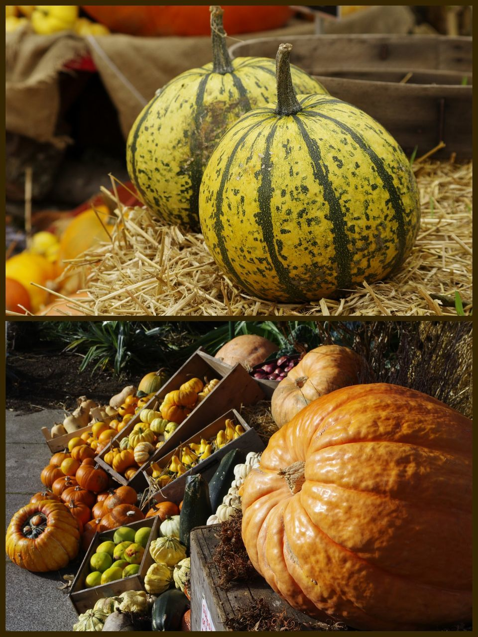 pumpkin, food and drink, food, vegetable, gourd, healthy eating, freshness, no people, squash - vegetable, fruit, day, halloween, outdoors, close-up