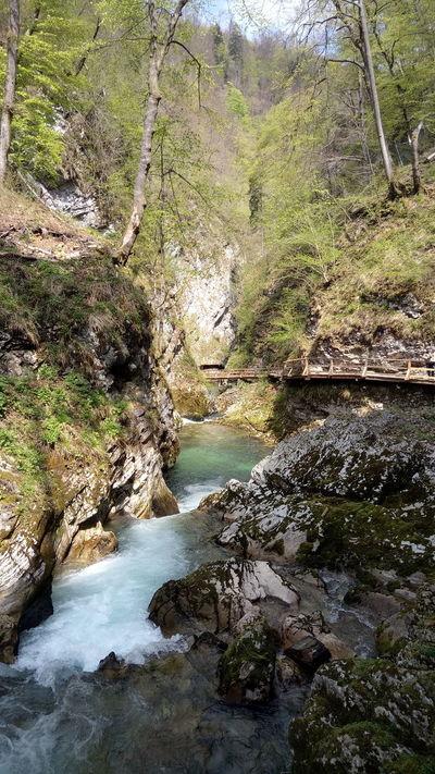 Water Outdoors Nature Forest Soteska Vintgar Vintgar Klamm Wildbach