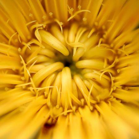 my yellow Flowers Macro Photography Macro Nature Taking Photo