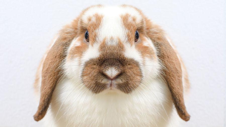 Lovely bunny