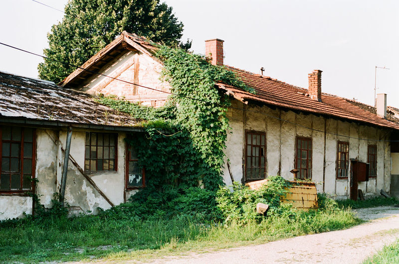 Analogue Photography Film Ruins Abandoned Architecture Building Building Exterior Built Structure Clear Sky Day Green Color Growth House Nature No People Old Old House Outdoors Plant Residential District Roof Sky Tree Window