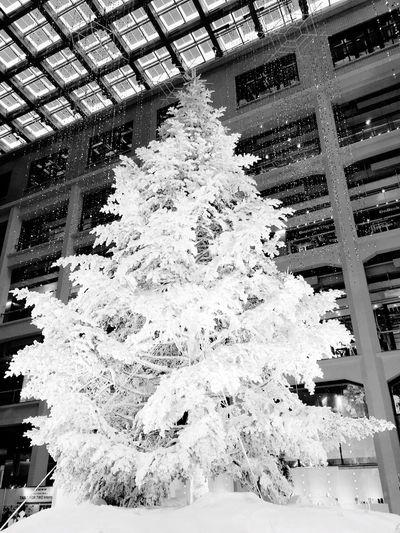 東京駅 丸の内南口前にあるKITTEにて。 KITTE Christmas Tree White Christmas Tokyo Tokyo Station KITTE MARUNOUCHI Hello World Tokyo Days Tadda Community Blackandwhite Photography Black And White Black & White Blackandwhite