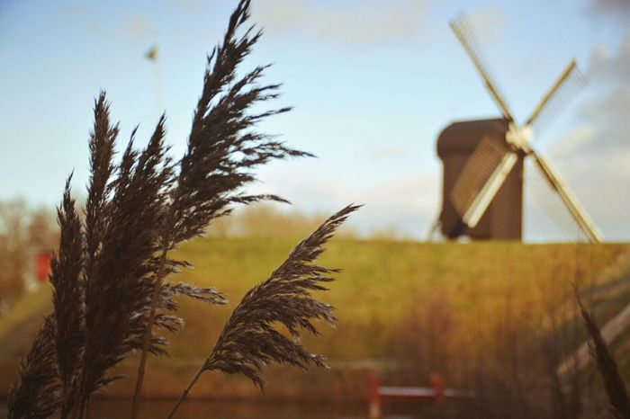Windmill Wind Power Nature Beauty In Nature No People Architecture Outdoors Water Day Sky