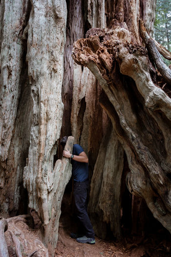 Adult Adults Only Beauty In Nature Forest Full Length Hidden Places Hiking Men Mystery Nature Old Tree One Person Outdoors People Textured  The Secret Spaces Tree Tree Trunk Young Adult TCPM Break The Mold Sequoia Tree Rewilding