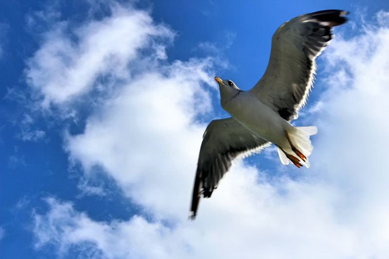 Sea gulls that I shoot in my trip to Gujarat, India. Seagulls Nature Check This Out SaveNature Firsteyeempicture First Eyeem Photo
