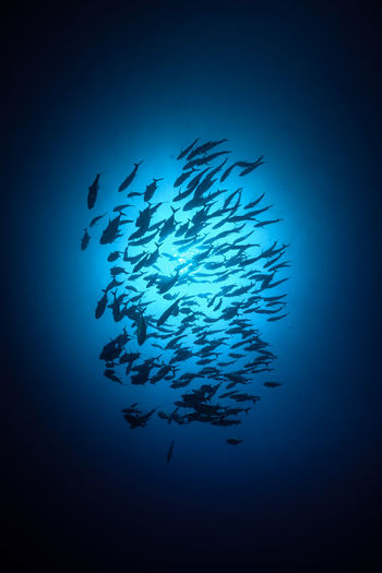 Low angle view of fish swimming underwater