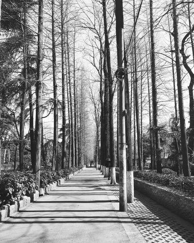 Treelined pathway along trees
