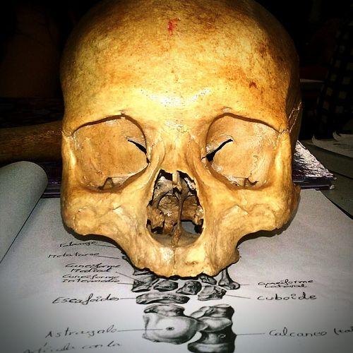 History 😚 Skulls♥ Expresion Face