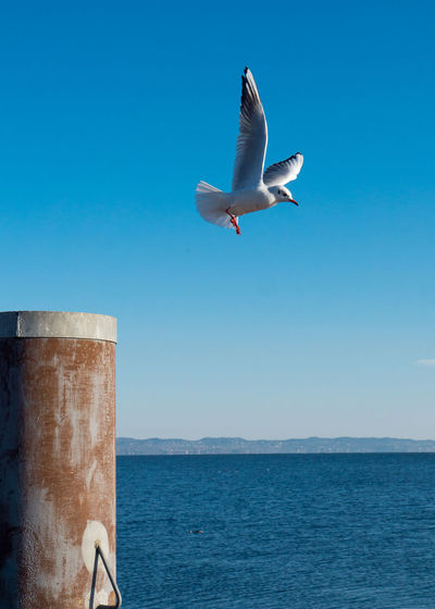 Seagull Flying Over Sea Against Clear Blue Sky