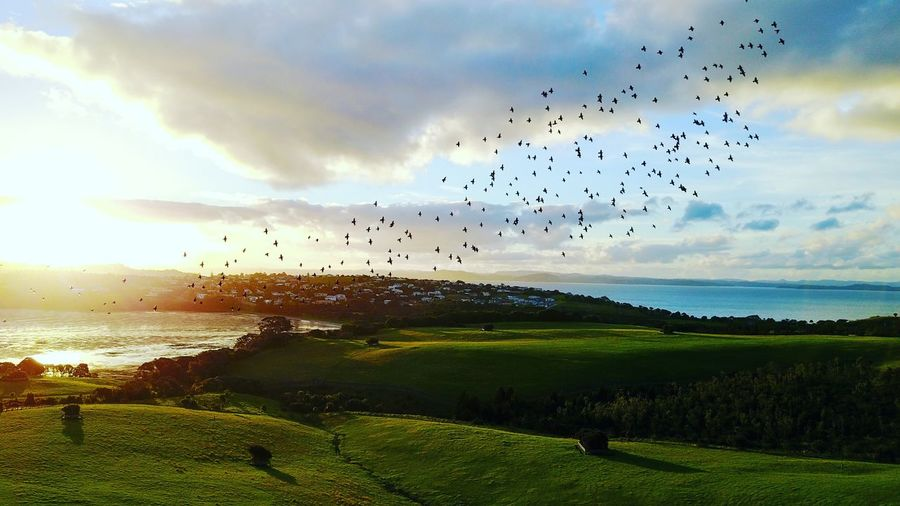 Shakespeare park New Zealand Birds Nature Sunset Flying Large Group Of Animals Flock Of Birds Bird Nature Animal Wildlife No People Sky Animal Themes Outdoors Animals In The Wild Scenics Cultures Sea Beauty In Nature Cloud - Sky Grass Tree Beach First Eyeem Photo DJI Mavic Pro Dji