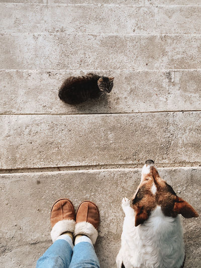 Low section of person with dog and cat standing on stairs