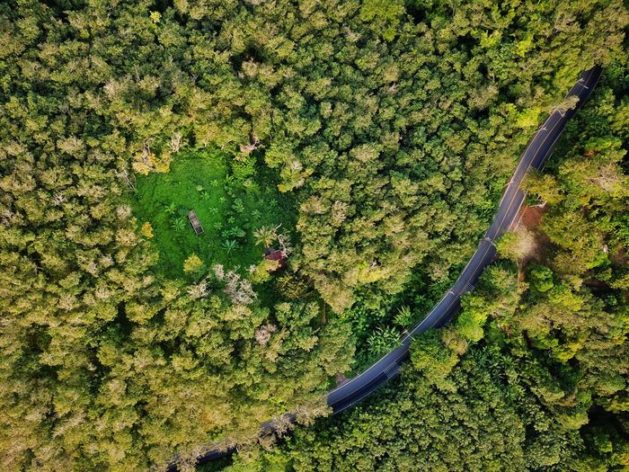 Drone view of road amidst trees at forest