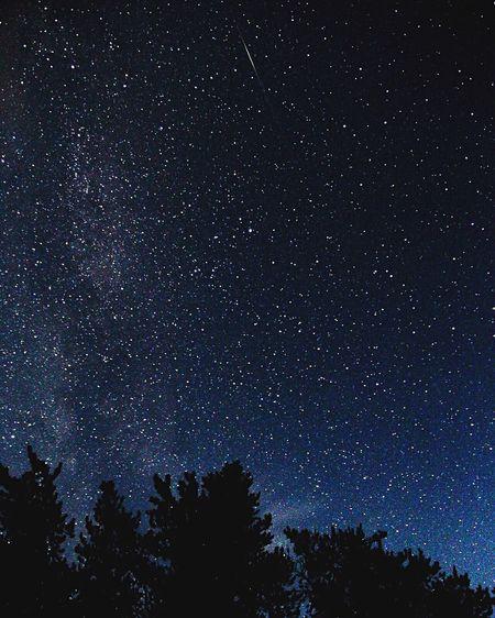 Scenics Night