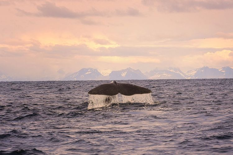 Whale swimming in sea against sky
