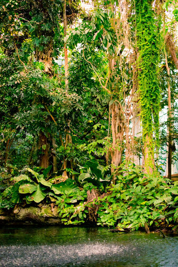 Amazon Amazonian Forest Barcelona Botanical Gardens Botany Cosmocaixa Excursion Interesting Knowledge Leaves Nature Pond Rain SPAIN Study Tour Trees Tropical Water