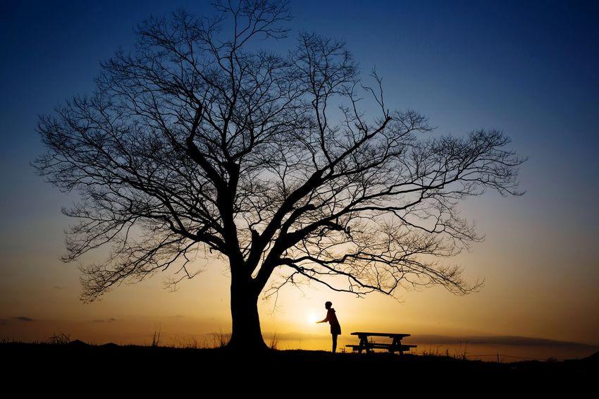 사랑나무 Korea Hwasoon Lovetree Tree Sunset Full Length Men Silhouette Water Rural Scene Sky Landscape Single Tree Long Shadow - Shadow Focus On Shadow Moonlight Ocean Sky Only Treetop