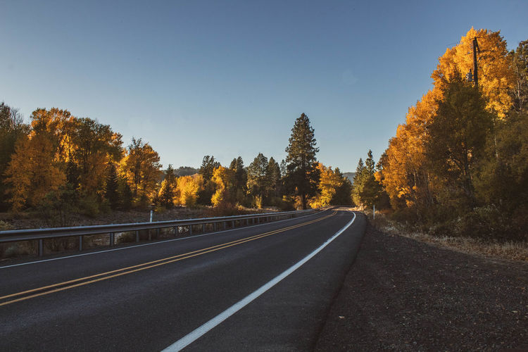 Road amidst trees against clear sky during autumn