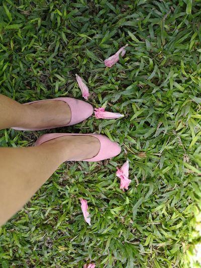 Pink Low Angle