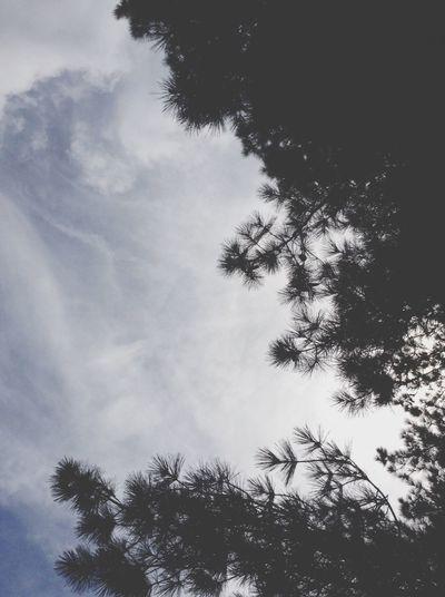 Pine-ful Outside