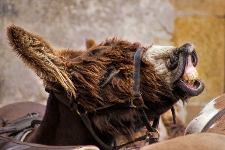 Donkey smile Theportraitist-2016eyeemawards Animal Photography Donkey Animal Head  Showcase May Outdoors No People The Street Photographer - 2016 EyeEm Awards The Photojournalist - 2016 EyeEm Awards Nature's Diversities