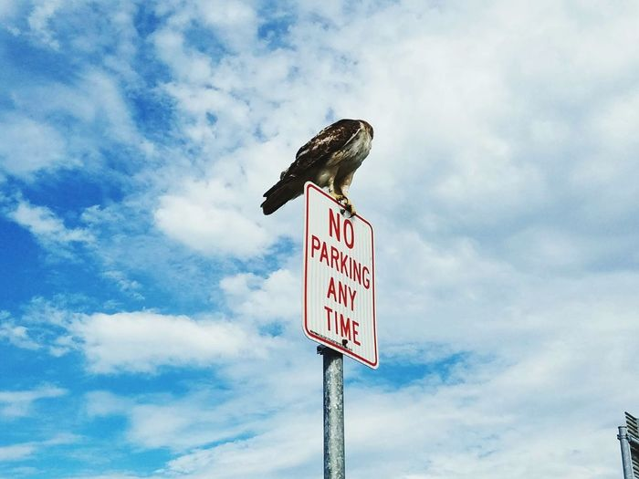 Low angle view of bird perching on no parking sign