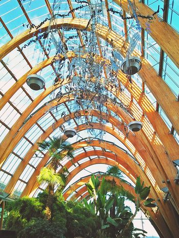 Indoors  Architecture Ceiling Built Structure Neighborhood Map The Great Outdoors - 2017 EyeEm Awards The Street Photographer - 2017 EyeEm Awards EyeEmNewHere The Photojournalist - 2017 EyeEm Awards The Architect - 2017 EyeEm Awards Architectural Feature Wood Wood Structure Arch Trees Greenhouse Sun The Portraitist - 2017 EyeEm Awards