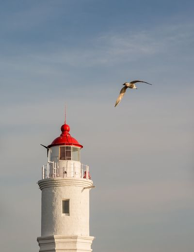 Tokarevskiy lighthouse in Vladivostok, Russia. Blue Sky Lighthouse Tokarevskiy Seagull Sunlight Evening Bird Flying Architecture Low Angle View Spread Wings Windmill Primorye Sky Close-up Window Vladivostok