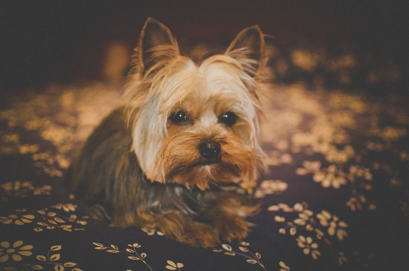 Cute Cute Pets I Love My Dog Animals Portrait From My Point Of View Taking Photos