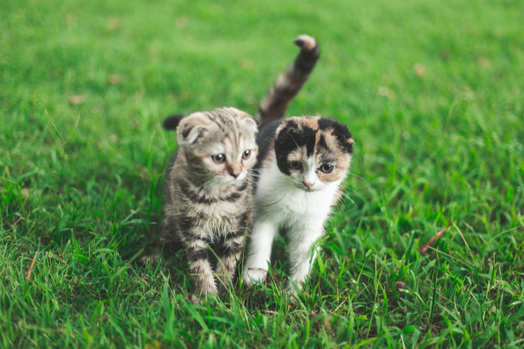 Portrait of cats on grass