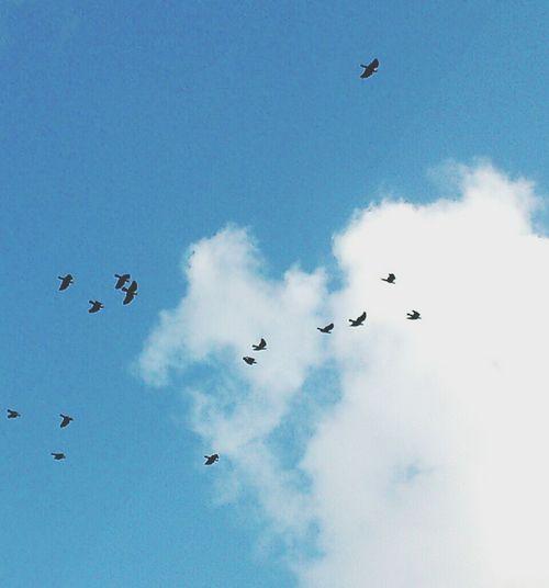 Bestoftheday Perfect Sky Birds Flying