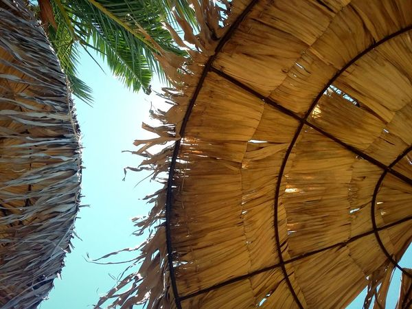 Enjoying the summer. Low Angle View Tree Day Nature Sky Summer Tranquility Sunny Beach Seaside Sun Sunlight Sunrays Palm Trees Umbrella Blue Tropical Tropical Climate Wooden Umbrellas Exotic