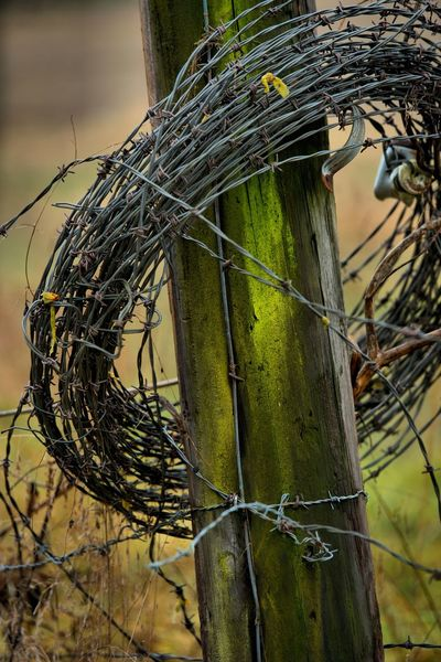 Out shooting today, a rainy overcast day, just the way I like it! Close-up Complexity Day Fence Fence Photography Fence Post With Barbed Wire Fence Posts With Barbed Wire Focus On Foreground Green Color Nature No People Outdoors