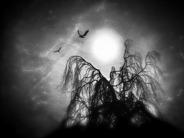 Without darkness there can be no light... Conceptual Blackandwhite Darkart Noir Shootermag NEM Submissions NEM Black&white NEM Landscapes AMPt_community Monochrome