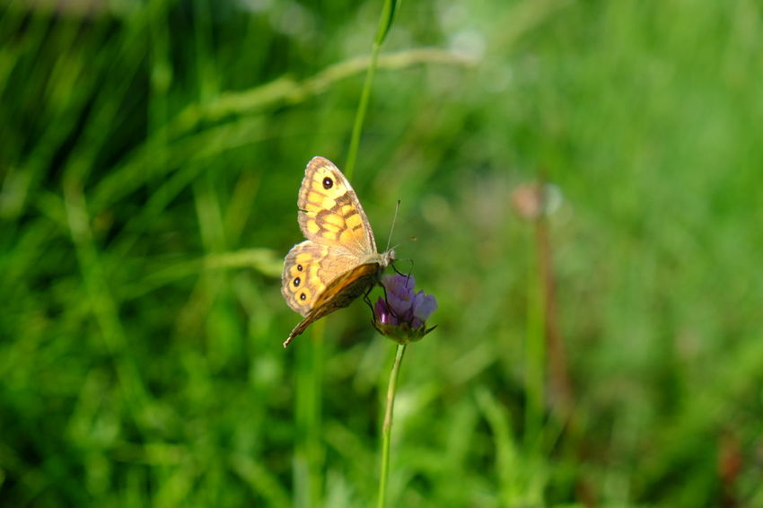 EyeEm Selects Perching Spread Wings Flower Full Length Butterfly - Insect Insect Leaf Animal Themes Close-up Plant