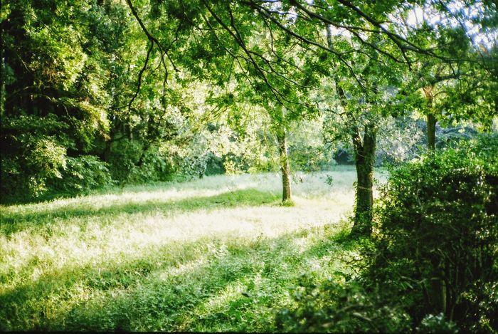 Tree Grass Tranquil Scene Chiba Olympus XA Olympusxa Film Film Photography Film Is Not Dead