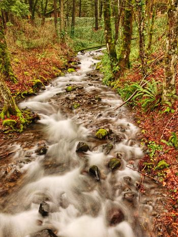 Starvation Creek, Oregon Forest Long Exposure Motion Flowing Water Nature Scenics Blurred Motion Beauty In Nature Tree Water Tranquil Scene Tranquility Outdoors Waterfall Travel Destinations Landscape No People Day