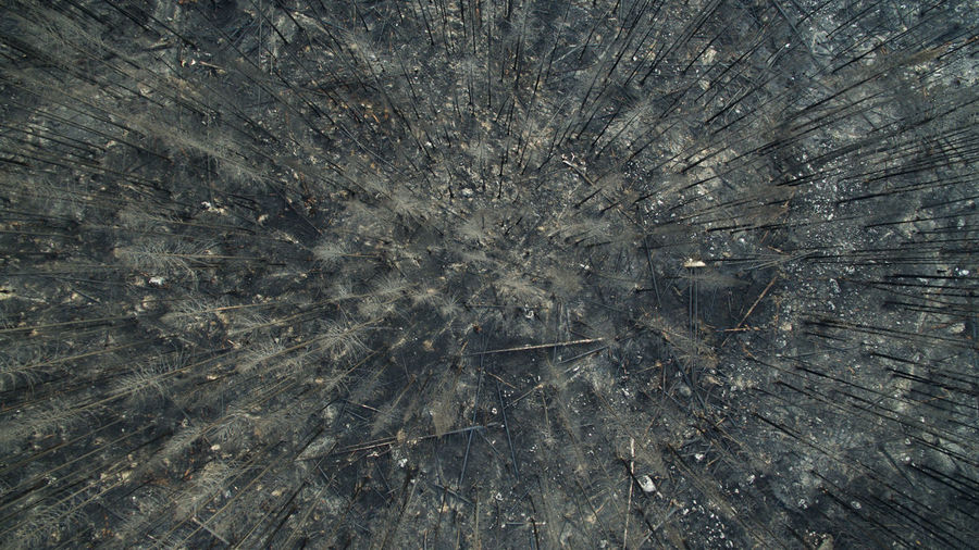 Aerial Photography Aerial View Burnt Burnt Trees Dji Drone  Dronephotography Fire Forrest Fire Highway Landscape Nature No People Outdoors PNW Rugged Terrain Texture Trees Washington Washington State