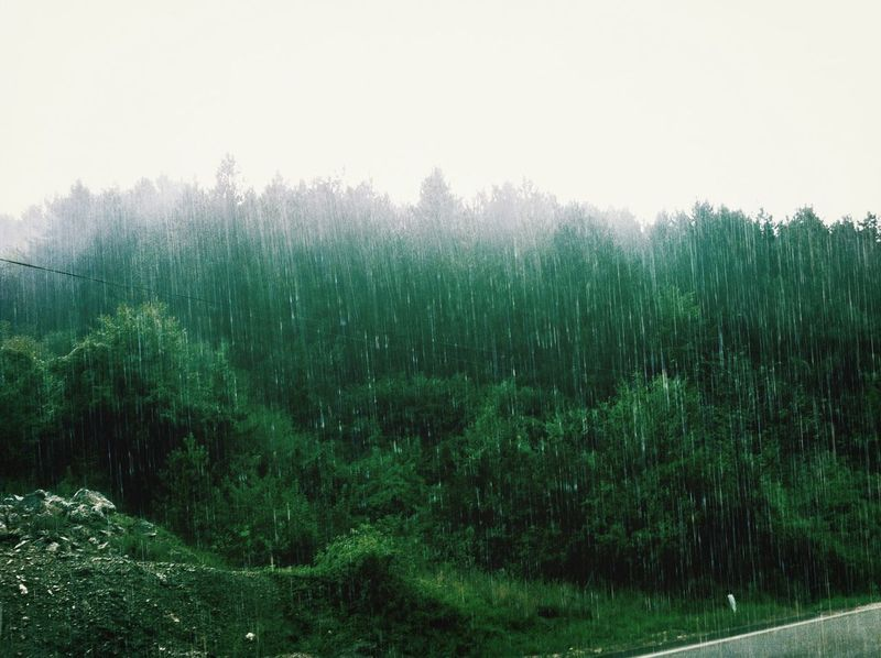 Forest Rain EyeEm Nature Lover Lovely Weather