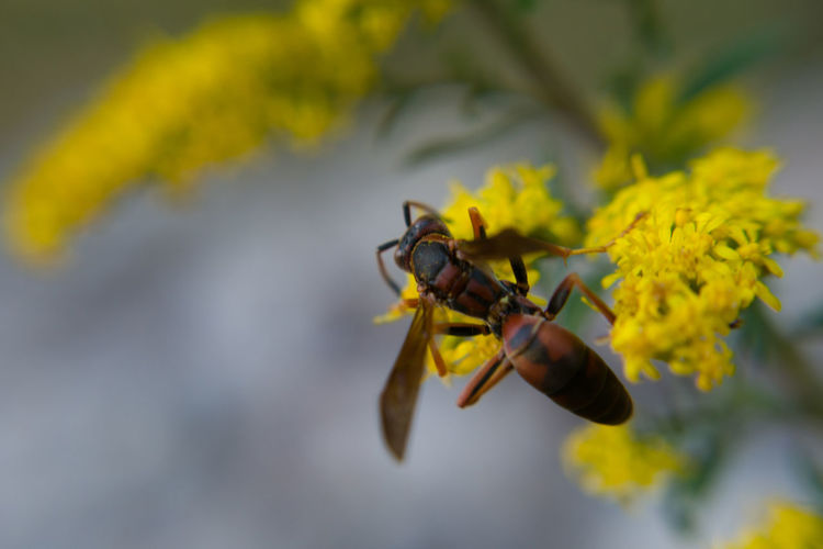 EyeEm Best Shots - Flowers Flowers, Nature And Beauty Flower Collection Flower Photography EyeEm Best Shots EyeEm Gallery EyeEm Nature Lover EyeEm Best Edits EyeEmBestPics Nature Nature_collection Nature Photography Nature On Your Doorstep Nature's Diversities Wildflower Uncultivated Yellow Insect Close-up Wasp