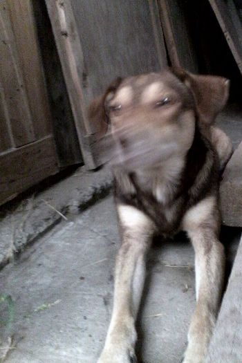 Unedited Photo Unedited Unedited Glitch @wolfzuachis Ionitaveronica Wolfzuachis Eyeem Market Glitch Glitch Dog
