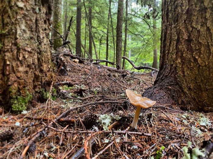 Mushroom growing in forest