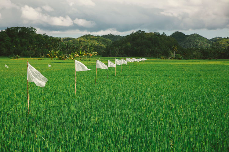 Agriculture Cloudy Field Flags Green Eyeem Philippines Outdoors Rice Rice Field Rural Scene Summer Tranquil Scene Tropical Climate Valley White White Flag The Great Outdoors - 2016 EyeEm Awards The Great Outdoors With Adobe Beautifully Organized Connected By Travel Lost In The Landscape