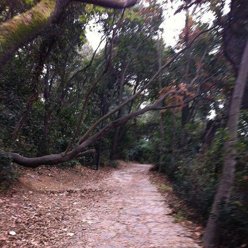 Istanbul Koru Park Türkiye bosphorus bogaz bogazkoprusu bridge kopru manzara nature fethipasa road orman uskudar