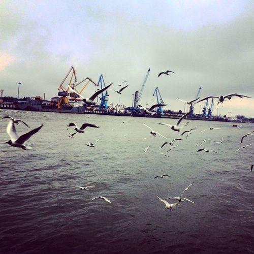 بندر_انزلي Bandar Anzali Iran Sea Seaside Birds Gilan