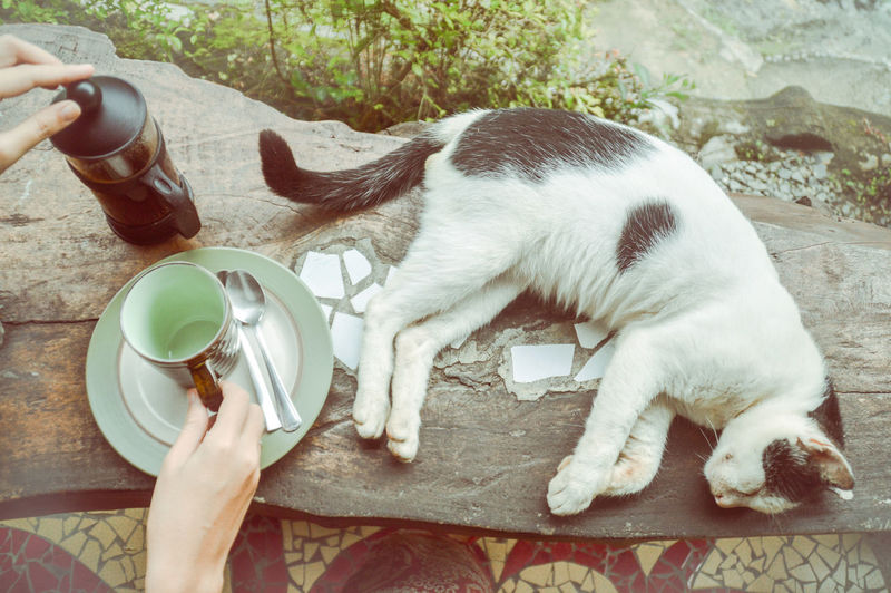 Close-up of hand holding cat drinking water