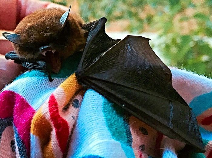 What I Value Bats Wildlife Nature