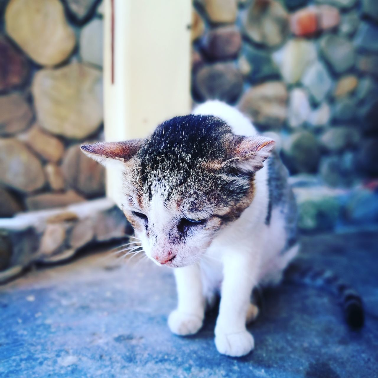 domestic cat, pets, domestic animals, animal themes, one animal, feline, mammal, no people, day, outdoors, close-up
