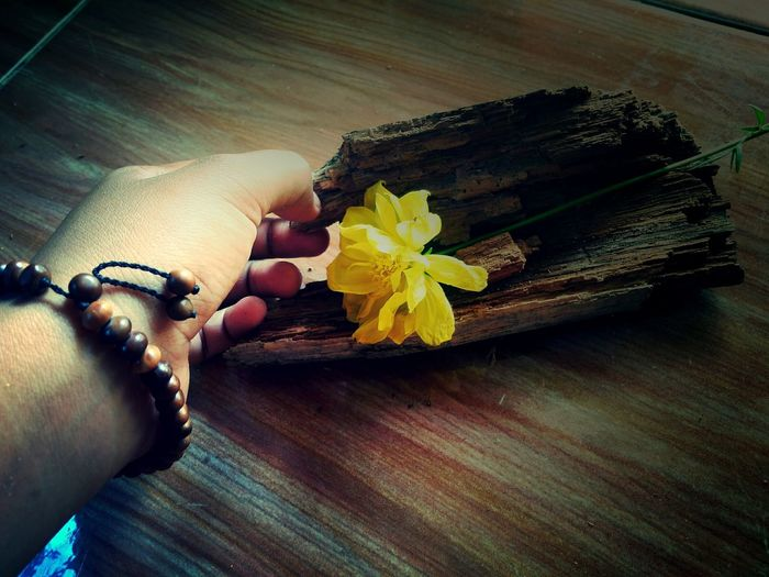 Human Hand Flower Yellow Only Women first eyeem photo