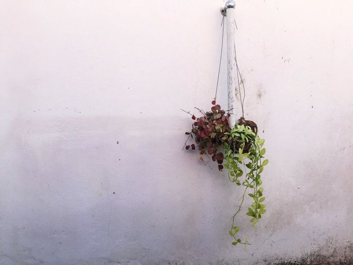 Plant Wall -
