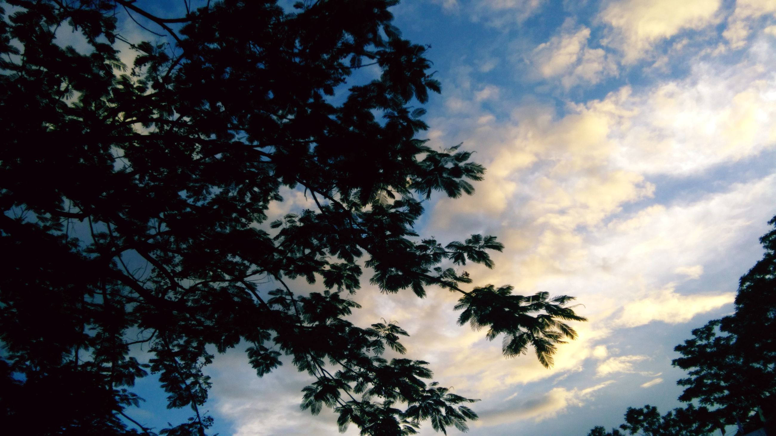 tree, low angle view, nature, sky, beauty in nature, growth, silhouette, branch, tranquility, no people, cloud - sky, scenics, outdoors, day, height